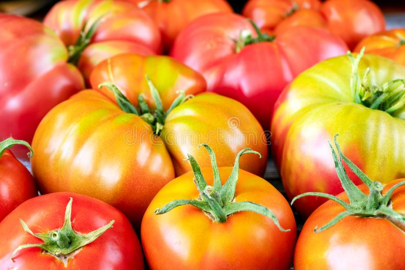 Close-up orgânico fresco dos tomates da herança fotografia de stock royalty free