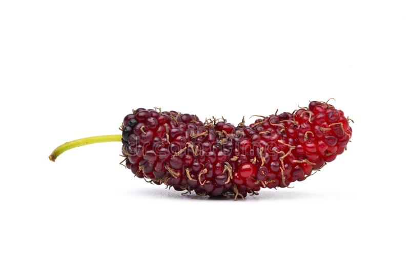 Organic Red Mulberry fruits. Close-up organic Mulberry fruits isolated on white background stock image