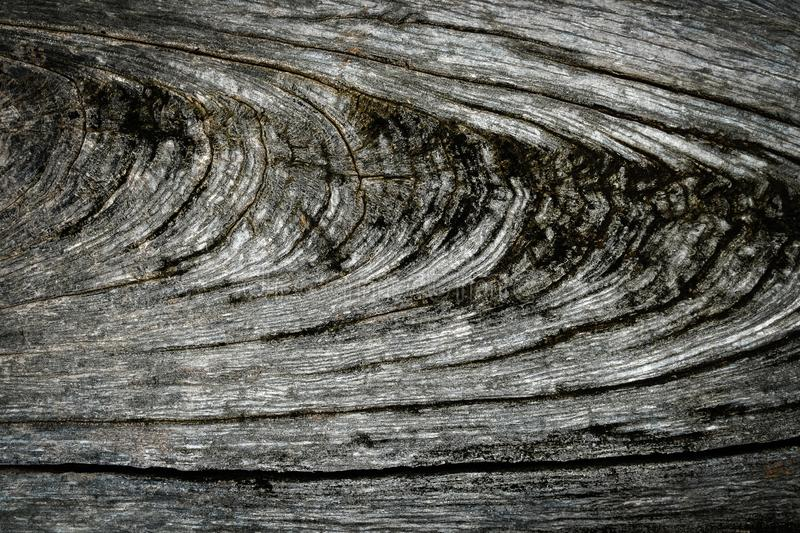 Close up Original gray wood from tree background and texture royalty free stock photography