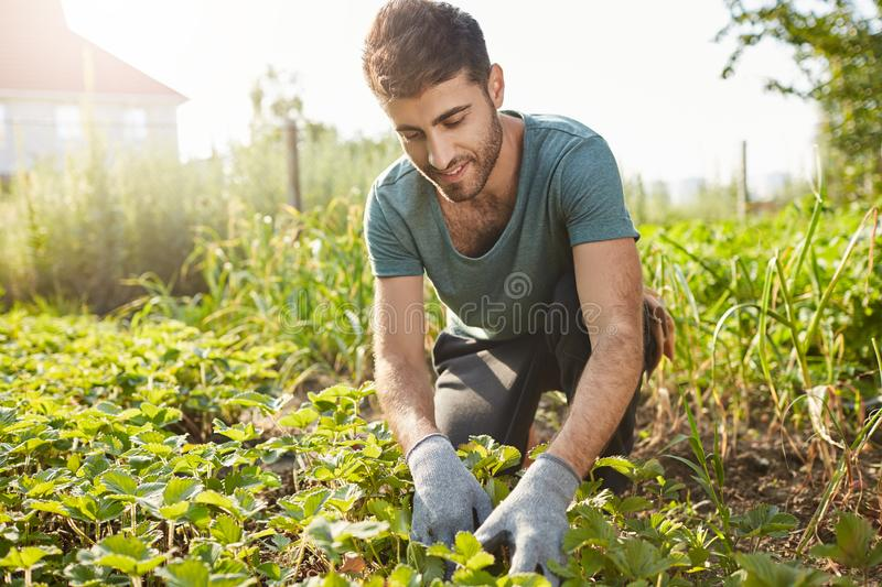 Close up outdoors portrait of mature attractive bearded male farmer in blue t-shirt smiling, working on farm, plans stock photo