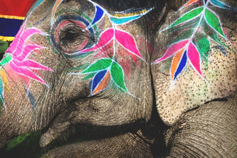 Close up of a painted elephant head for Holi Elephant Festival in Jaipur, Rajasthan, India. Close up of a colorful painted elephant head for Holi Elephant royalty free stock photos