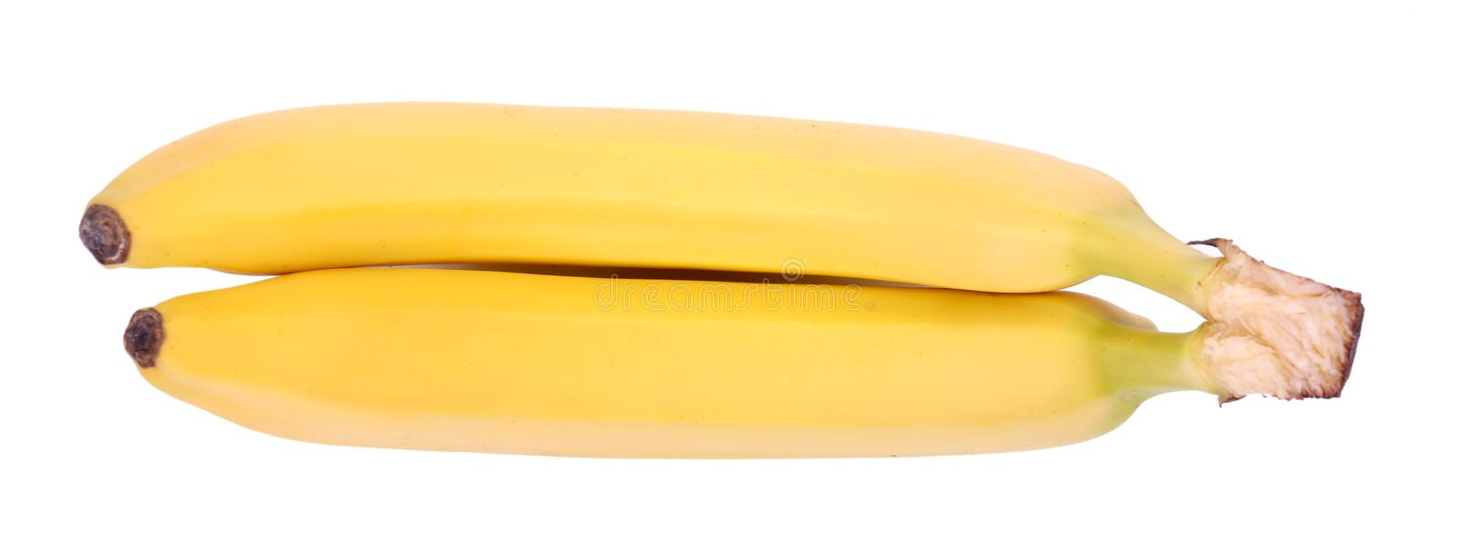 A close up of a pair of yellow bananas. Sweet bananas isolated on a white background. Tropical fruits full of healthful vitamins. Three whole and bright yellow royalty free stock photo