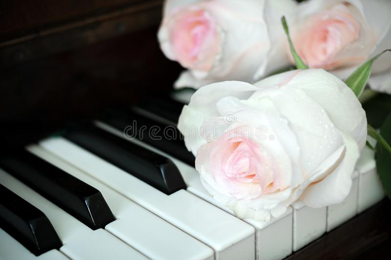 Close-up pale pink roses are lying on old piano keyboard. Close-up three pale pink roses are lying on old piano keyboard royalty free stock photography