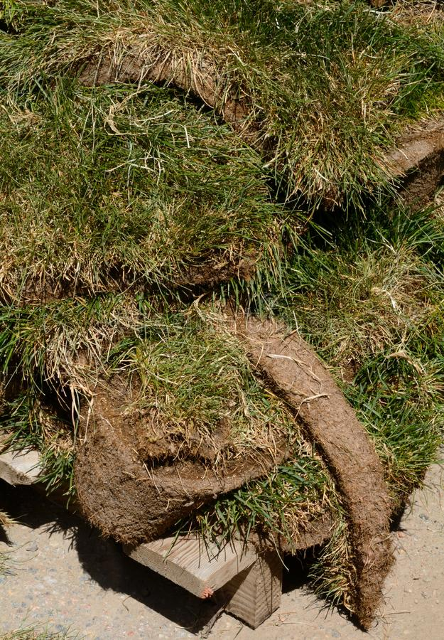Green grass sod patches. Close up of pallet of agricultural green grass sod patches waiting to be installed at construction site stock photo