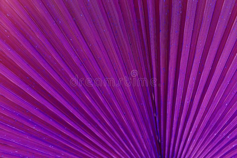 Close up of palm leaf. Abstract background, purple surreal tone stock images