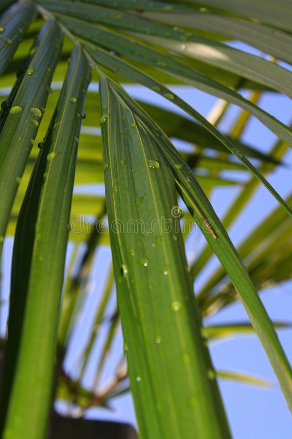 Close up Palm Leaves stock photos
