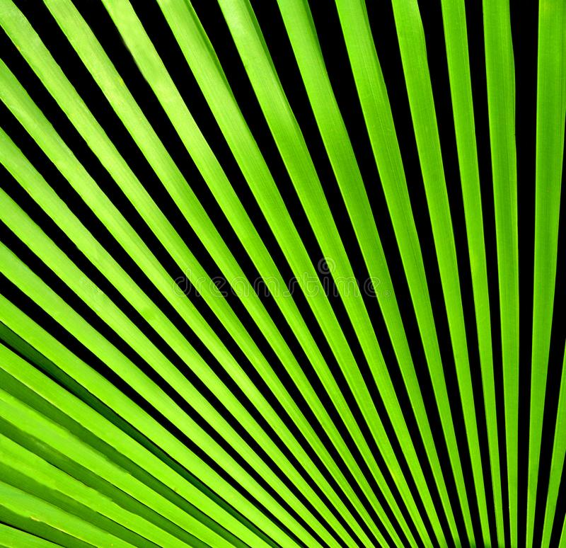 Close up of palm leaves on texture background. royalty free illustration