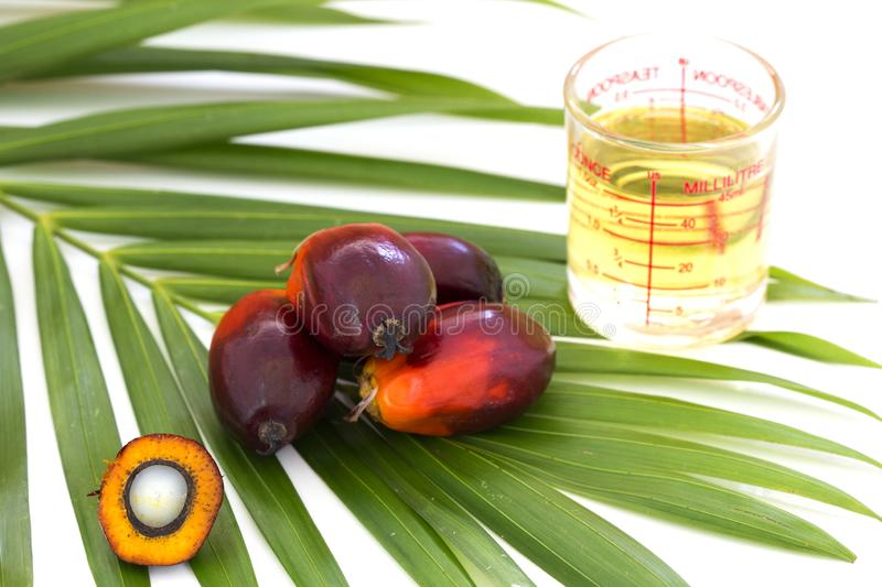 Close up of Palm Oil fruits with cooking oil and palm leaf isolated on white background royalty free stock photography
