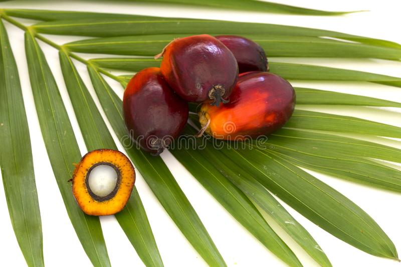 Close up of Palm Oil fruits with cooking oil and palm leaf isolated on white background stock photo