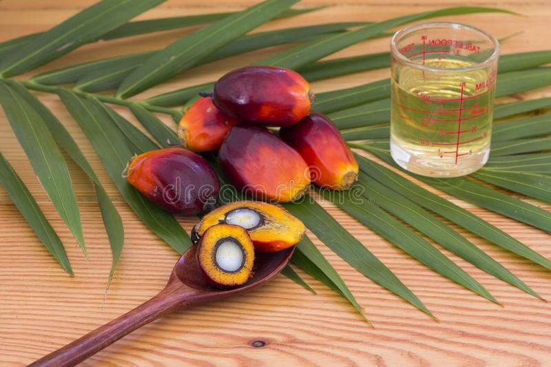 Close up of Palm Oil fruits with cooking oil and palm leaf on a wooden background royalty free stock photo