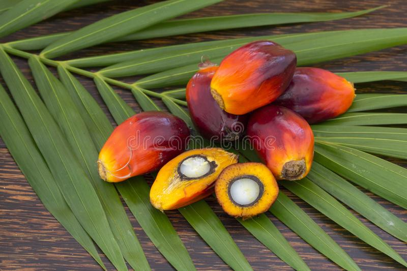 Close up of Palm Oil fruits with cooking oil and palm leaf on a wooden background stock photo