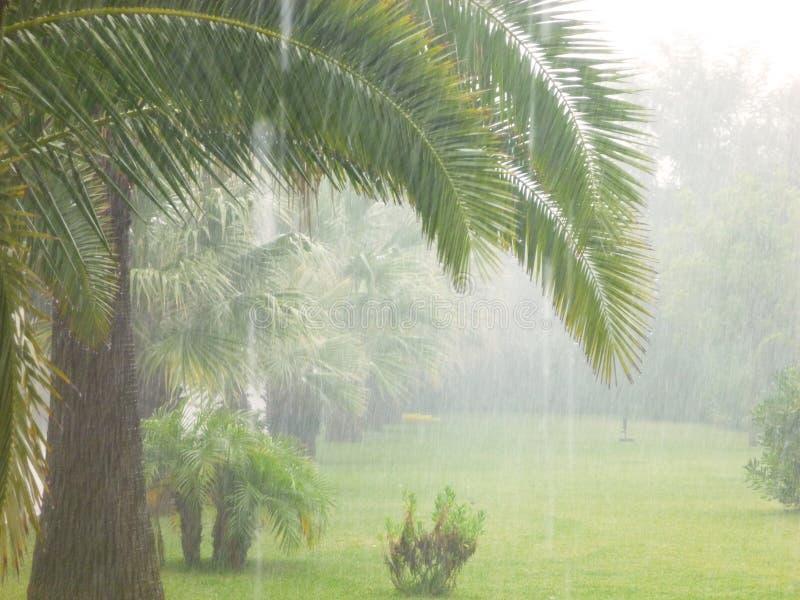Close up palms, rain, cilento, italy, europe. View in the garden, rain, cilento, italy, europe stock image