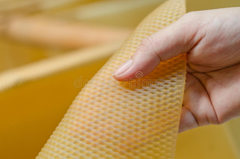 Close up of para rubber sheet. With farmer hand stock photography