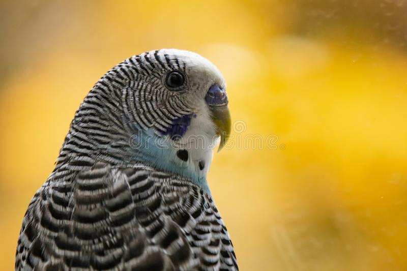Parrot in nature royalty free stock photo