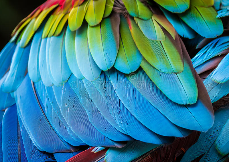 close up of parrot feathers for background stock photo