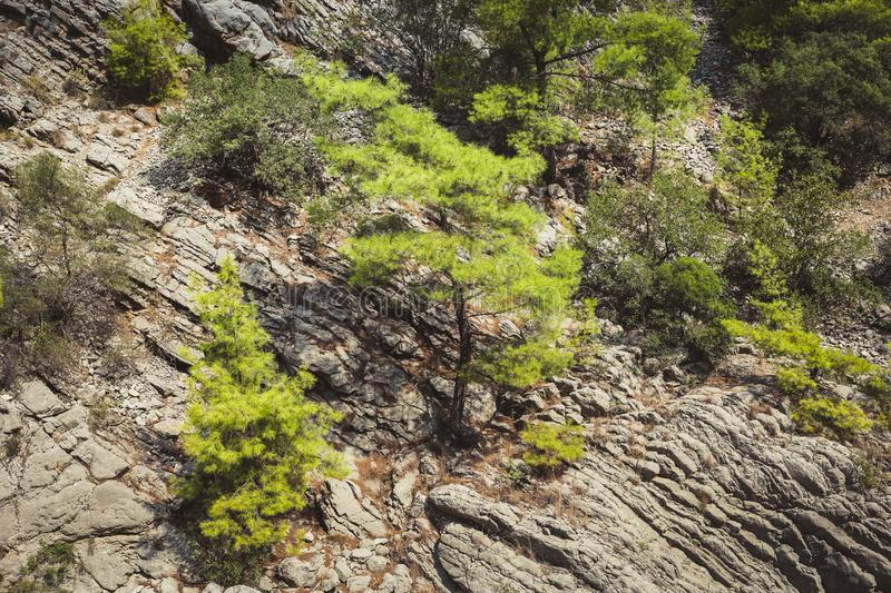 Close-up part of layered mountain slope and green trees growing on it. stock photo