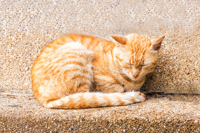 Close up peaceful orange red male cat sleeping on outdoor ground royalty free stock image