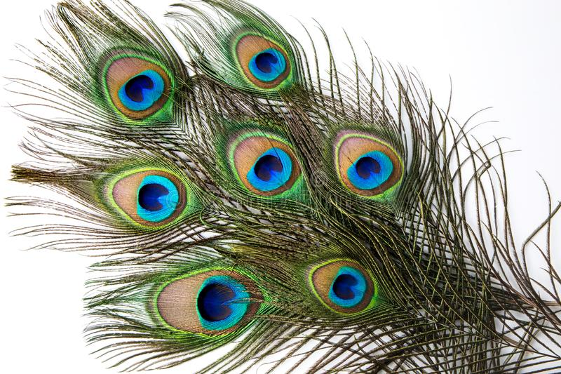 Close up of Peacock feather stock image