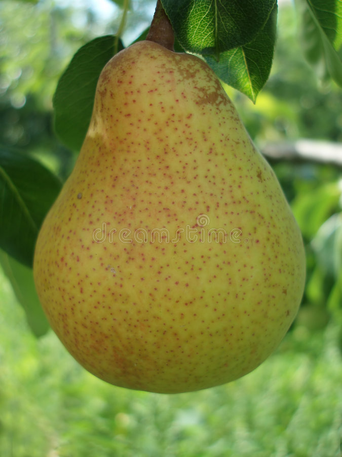 Close-up of pear royalty free stock photos
