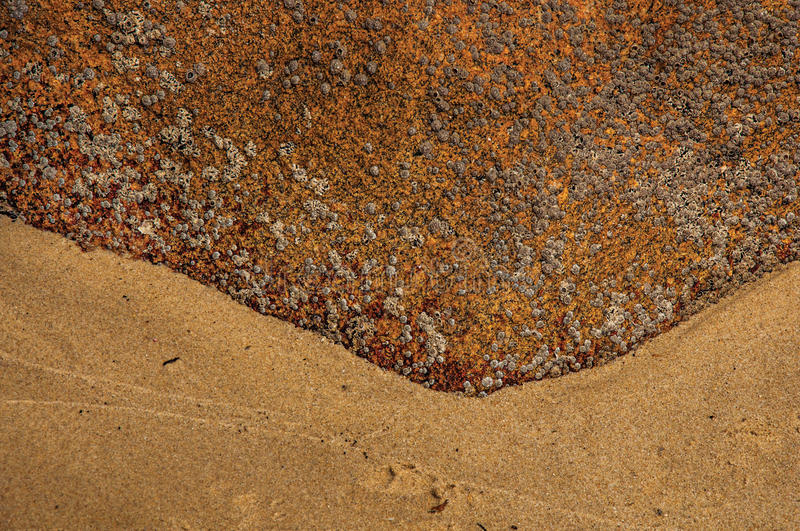 Close-up of peculiar rock with barnacles and sand in Paraty Mirim. royalty free stock photo