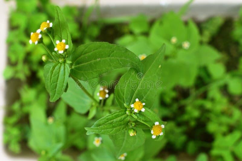 Close up pequeno amarelo verde do jardim fotos de stock