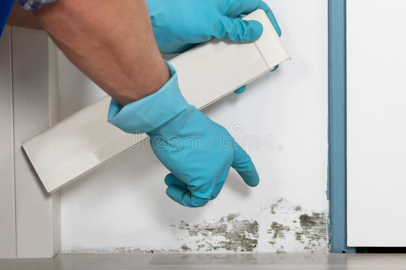 Person Hand Cleaning Moldy Wall stock photo