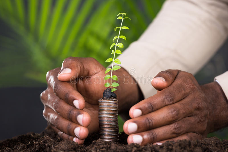 Close-up Of Person`s Hand Protecting Sapling. On Stacked Coins stock photos