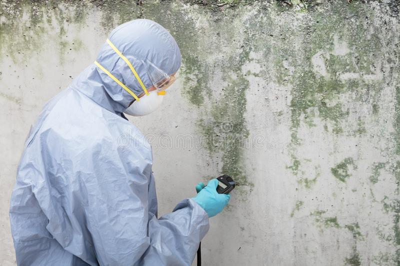 Pest Control Worker Examining Pest On Wall. Close-up Of A Pest Control Worker Standing In Front Of Damaged Wall stock photo