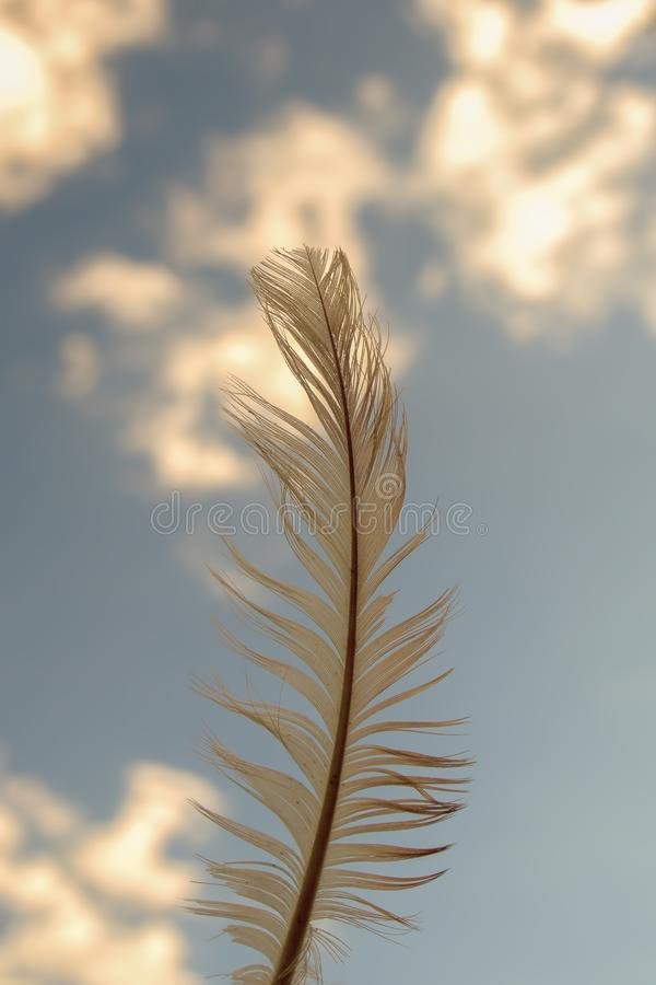 Bird feather against the sky stock images