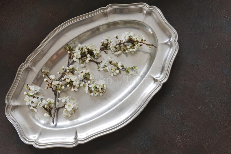 Close-up photo of Beautiful white Flowering Cherry Tree branch on metal vintage tray. royalty free stock image