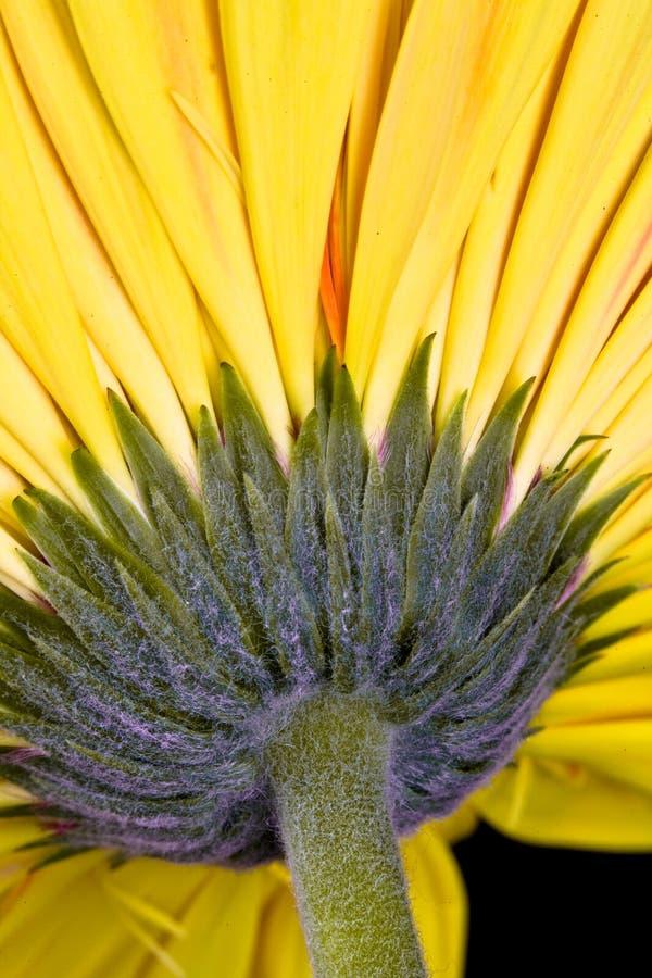 Close up photo of a beautiful yellow flower stock image