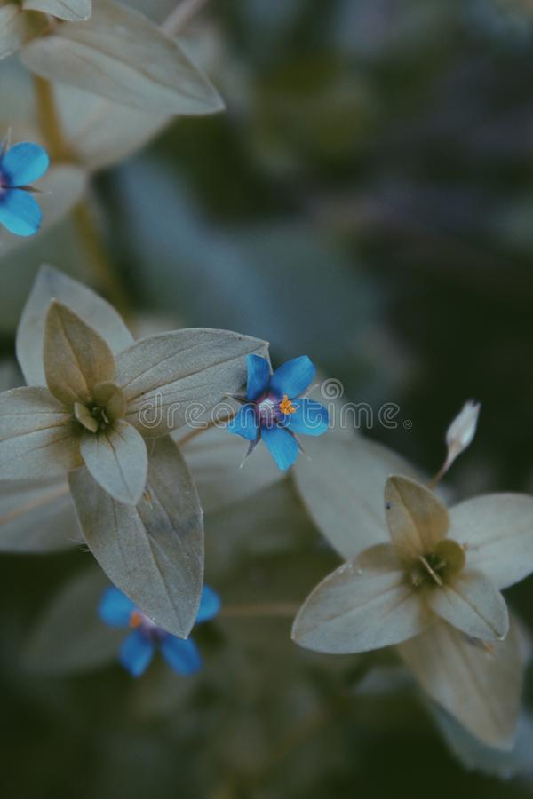 Close-up Photo of Blue and Grey Flower stock photos