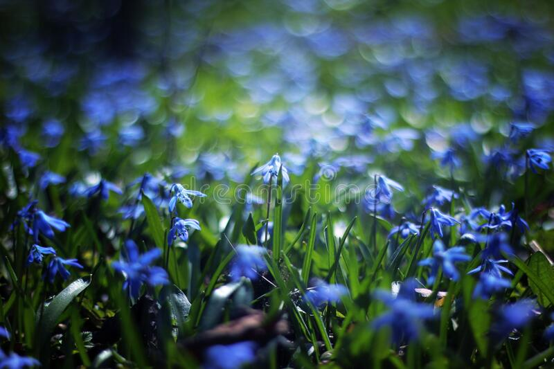 Close Up Photo Of Blue Petaled Flower During Daytime Free Public Domain Cc0 Image