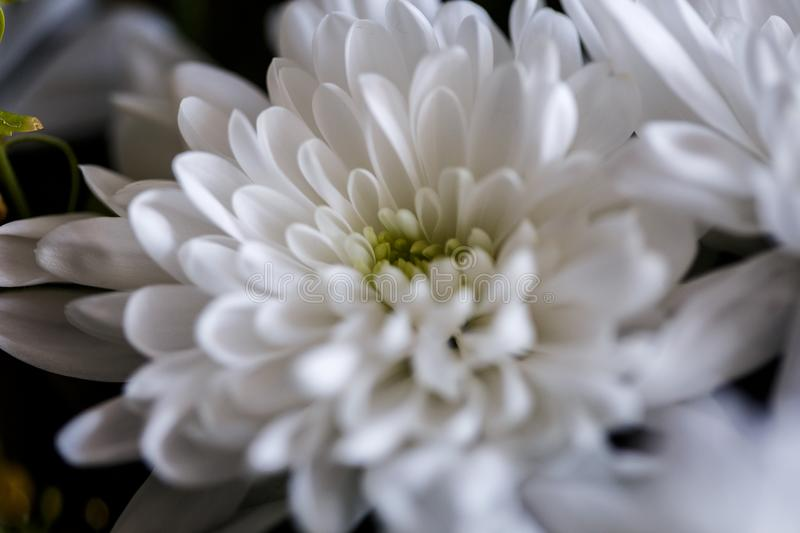Close-up photo of bouquet of golden-daisy in a basket. Spring mood, macro. Lens royalty free stock image