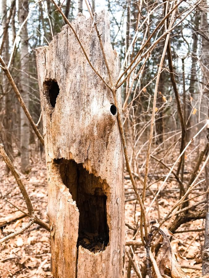 Close Up Photo of Brown Wooden Tree stock photography