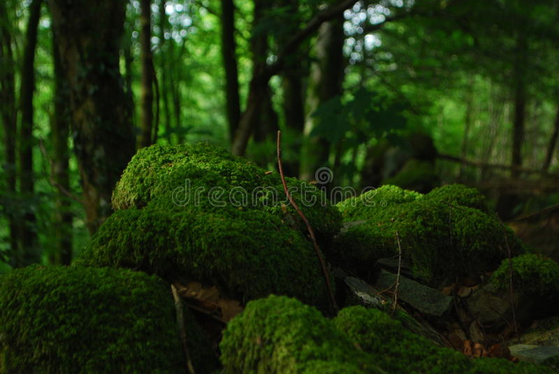 Close Up Photo Fo Green Moss On Rock Free Public Domain Cc0 Image