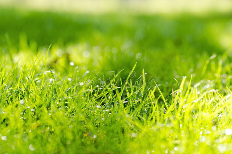 Close-up photo of green grass stalk with sunshine on a summer da stock image