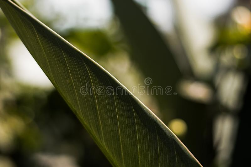 Close Up Photo of Green Leaf royalty free stock photo