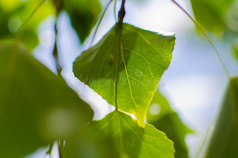 Close Up Photo of Green Leaf during Daytime royalty free stock photos