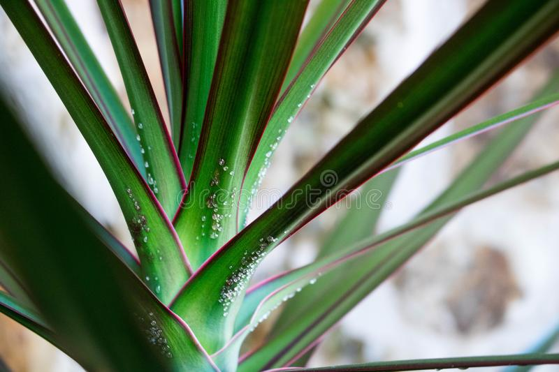 Close-up Photo of Green Leaf Plant royalty free stock photos