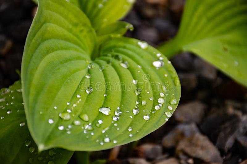 Close-up Photo Of Green Leaf Plant royalty free stock photography