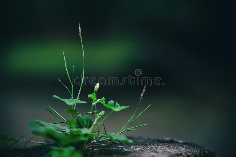 Close Up Photo Of Green Leafed Plant Free Public Domain Cc0 Image