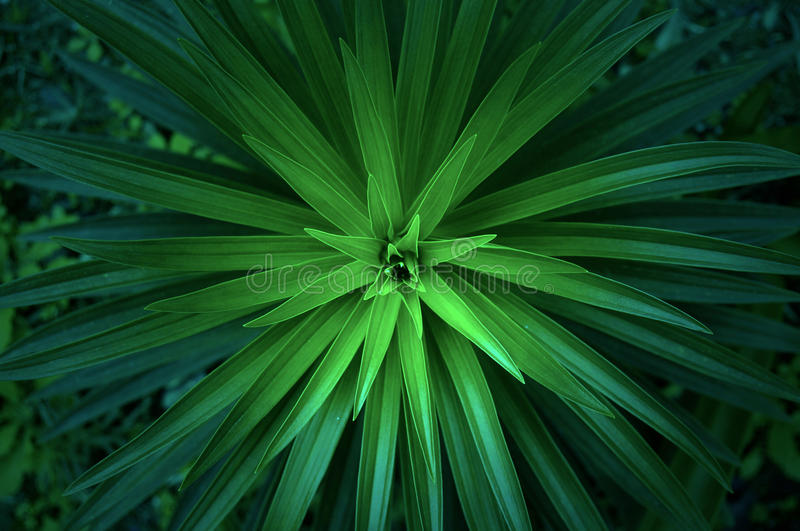 Close Up Photo Of Green Linear Plant Free Public Domain Cc0 Image