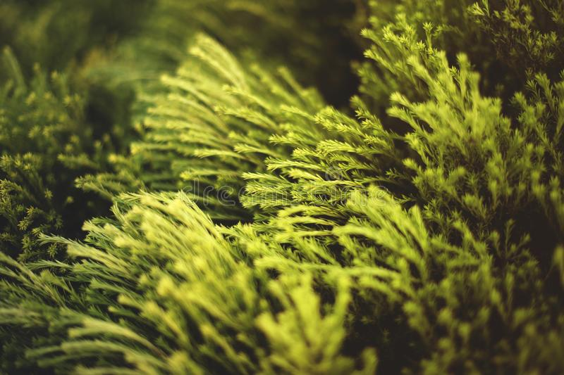 Close-up Photo of Green Plants royalty free stock photography