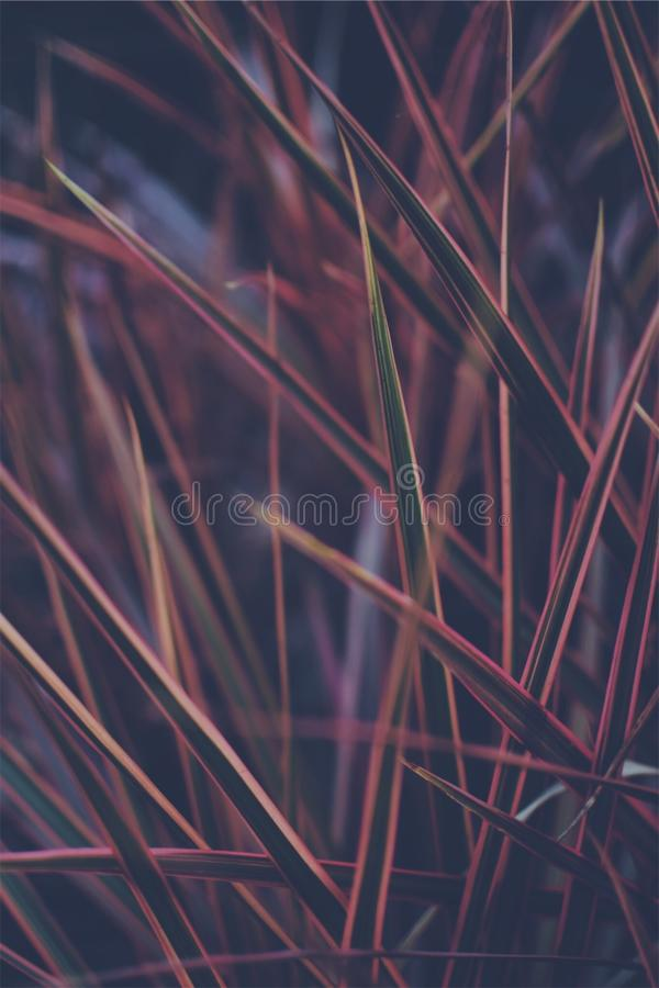 Close-up Photo of Green and Red Leaf Plant royalty free stock photos