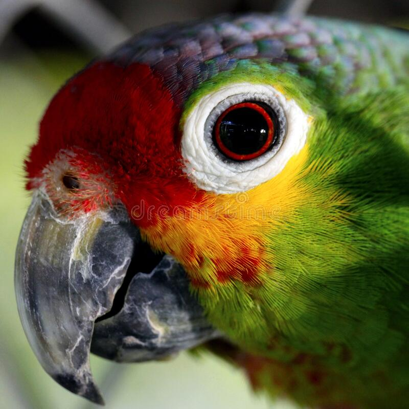 Close Up Photo of Green Red and Yellow Bird stock photo