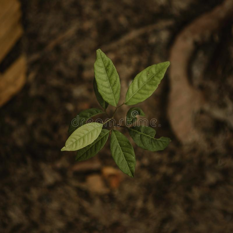 Close Up Photo of Green Seedling stock image