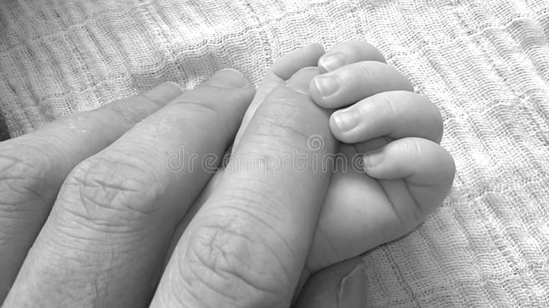 Close Up Photo Holding Hands of Baby and Human stock image