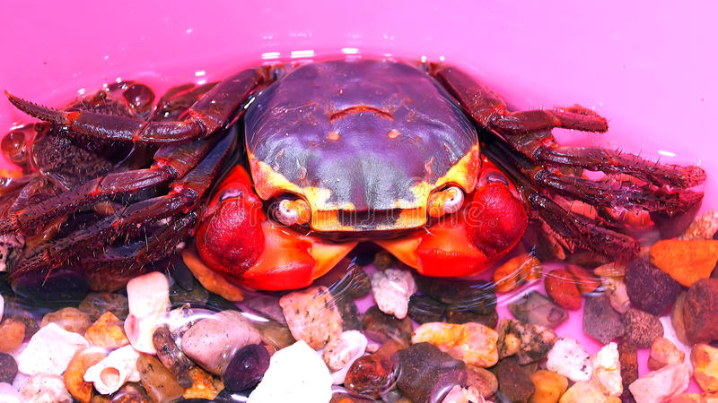 Close up photo of live crabs stock photography