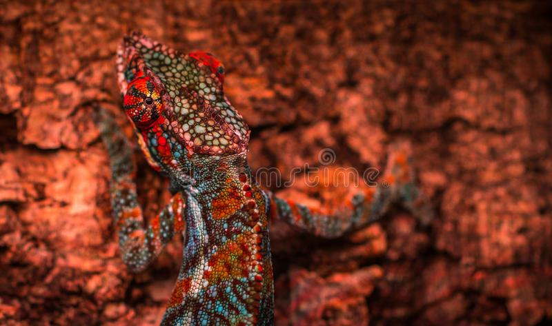 Close-up Photo Multicolored Lizard royalty free stock photos